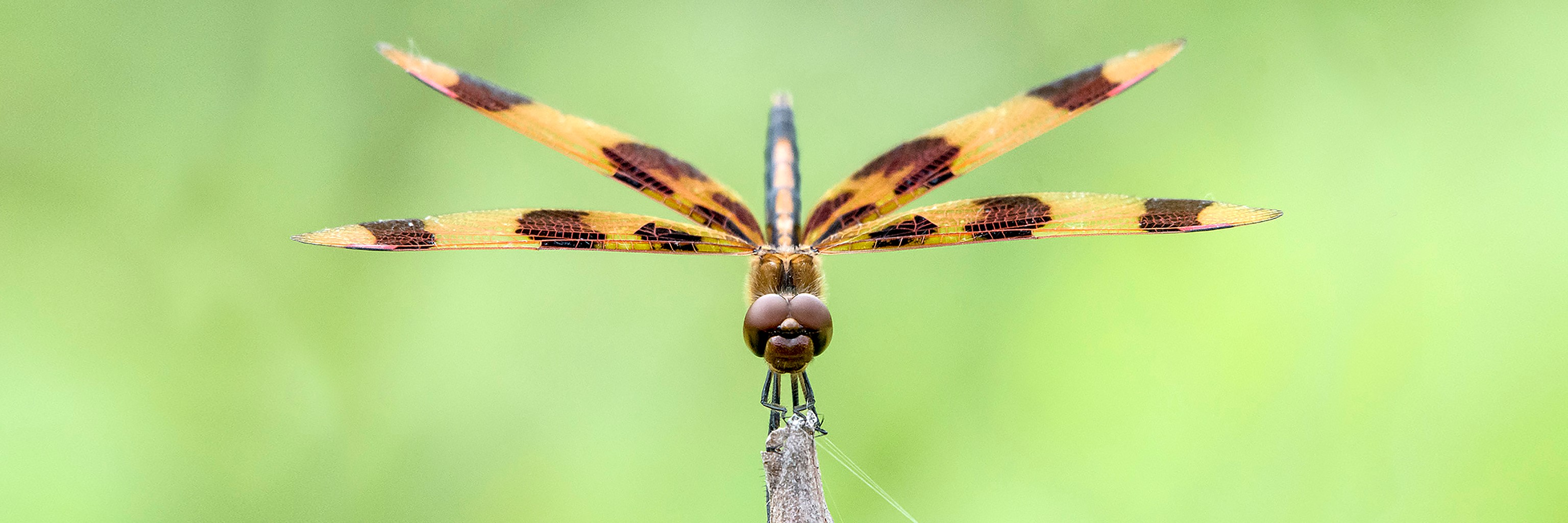 A picture of a dragonfly landing on a leaf.