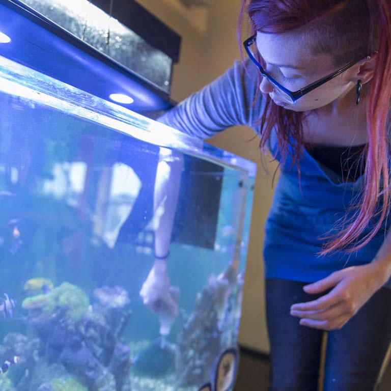 Sam Couch, animal exhibits manager at WonderLab, feeds the coral reef animals and fish in the Wonder Under the Wave: Coral Reef Aquarium exhibit at the WonderLab Museum of Science, Health, and Technology in Bloomington, IN.  Chris Howell, Herald-Times