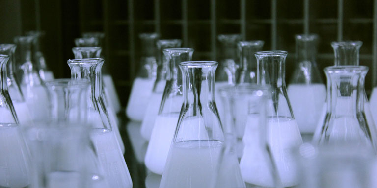 A picture of rows of flasks filled with a translucent white fluid.