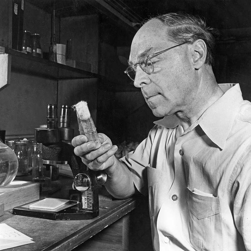 Hermann J. Muller examining a phial of fruit flies in his basement laboratory. | Photo from Encyclopædia Britannica, Inc.