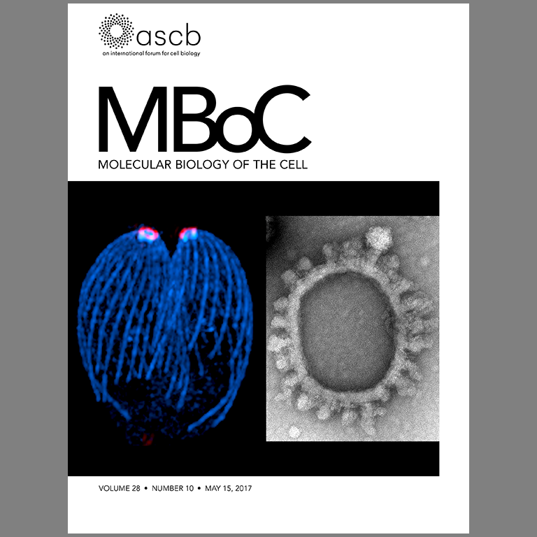 Cover of May 15, 2017, issue of MBoC
