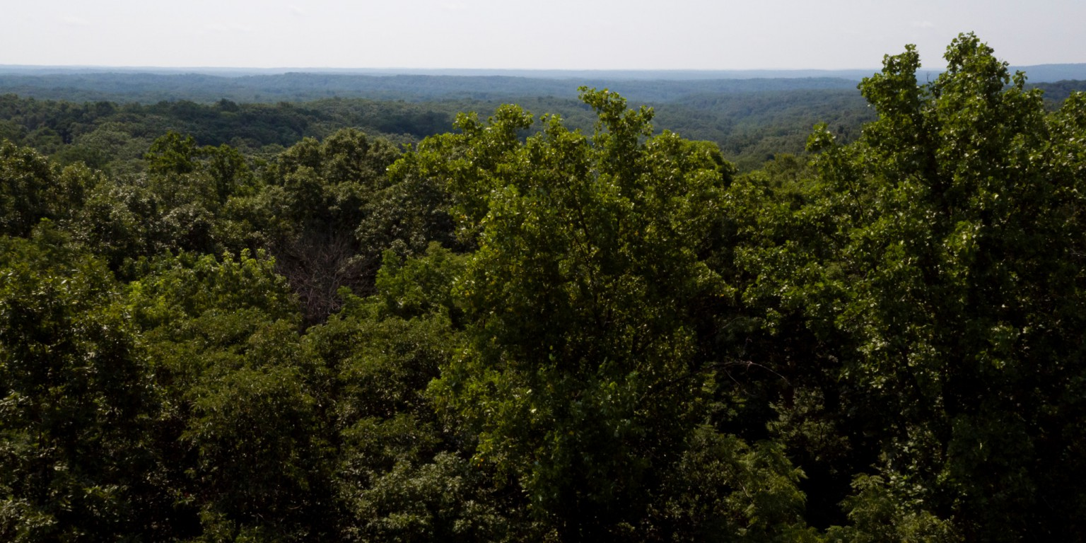 A bird's eye view of Lilly-Dickey Woods.