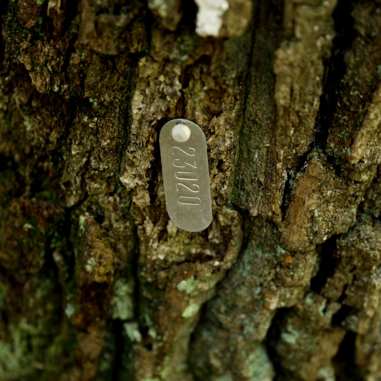 A numbered metal tag affixed to a tree.