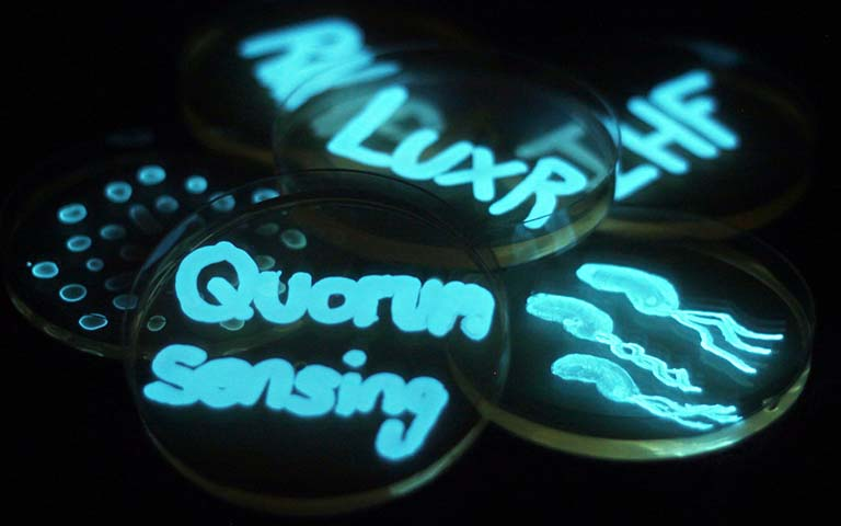 bioluminescent bacteria spelling out words on plates