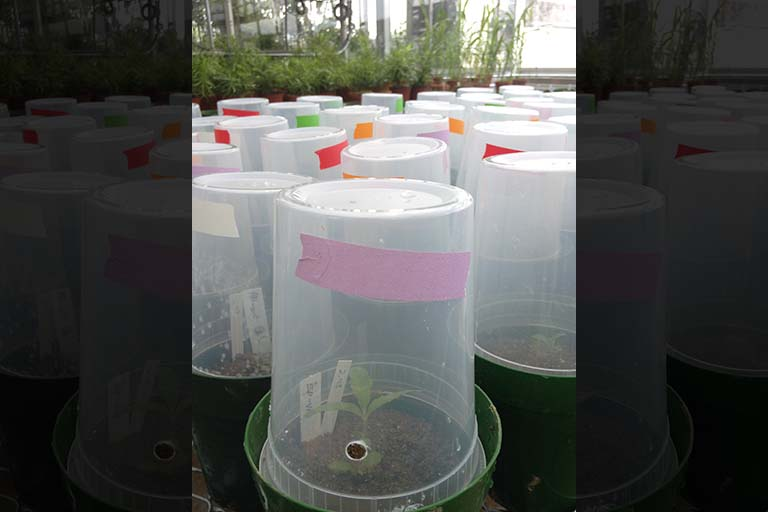 Humidity chambers used to enclose plants while manipulating the phyllosphere.