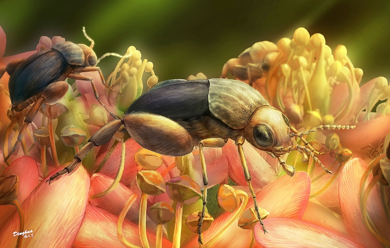 Artist's rendering of Angimordella burmitina, a new beetle species recently discovered encased in amber, feeding on eudicot flowers.