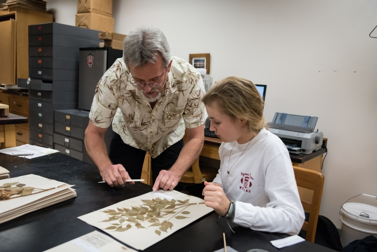 IU Herbarium director Eric Knox, left, and undergraduate student Maggie Vincent work with a preserved plant specimen.