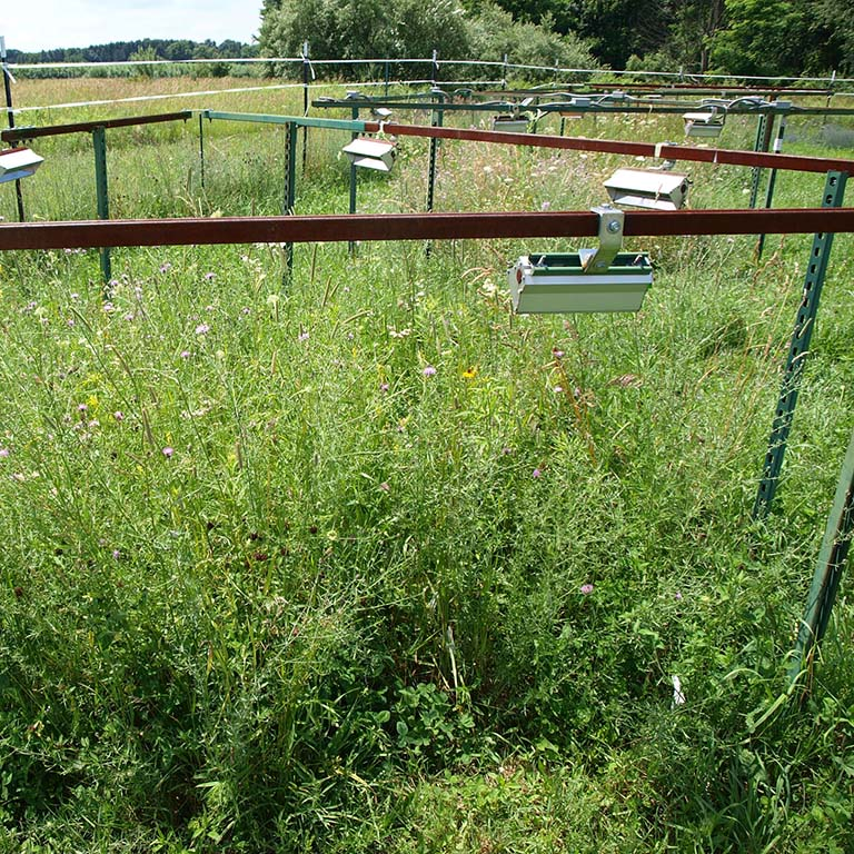 Experimental plots in meadow with metal fencing supporting the hanging infrared warming devices.