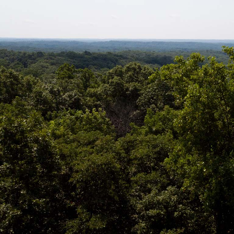Panoramic view of Lilly-Dickey Woods, a hardwoods forest in Brown County, Indiana.