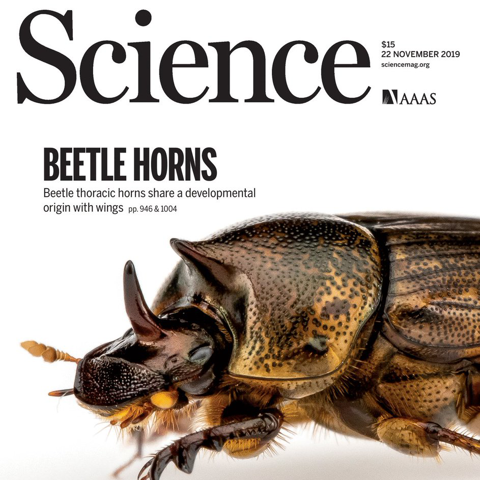 Cover of Nov. 22, 2019, Science journal, featuring Beetle Horns article and photo from Moczek Lab.