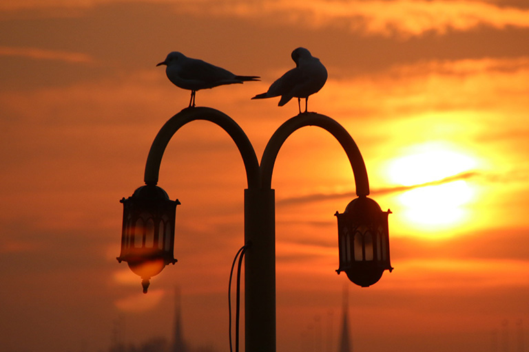 Two birds perch on a lamppost at twilight.