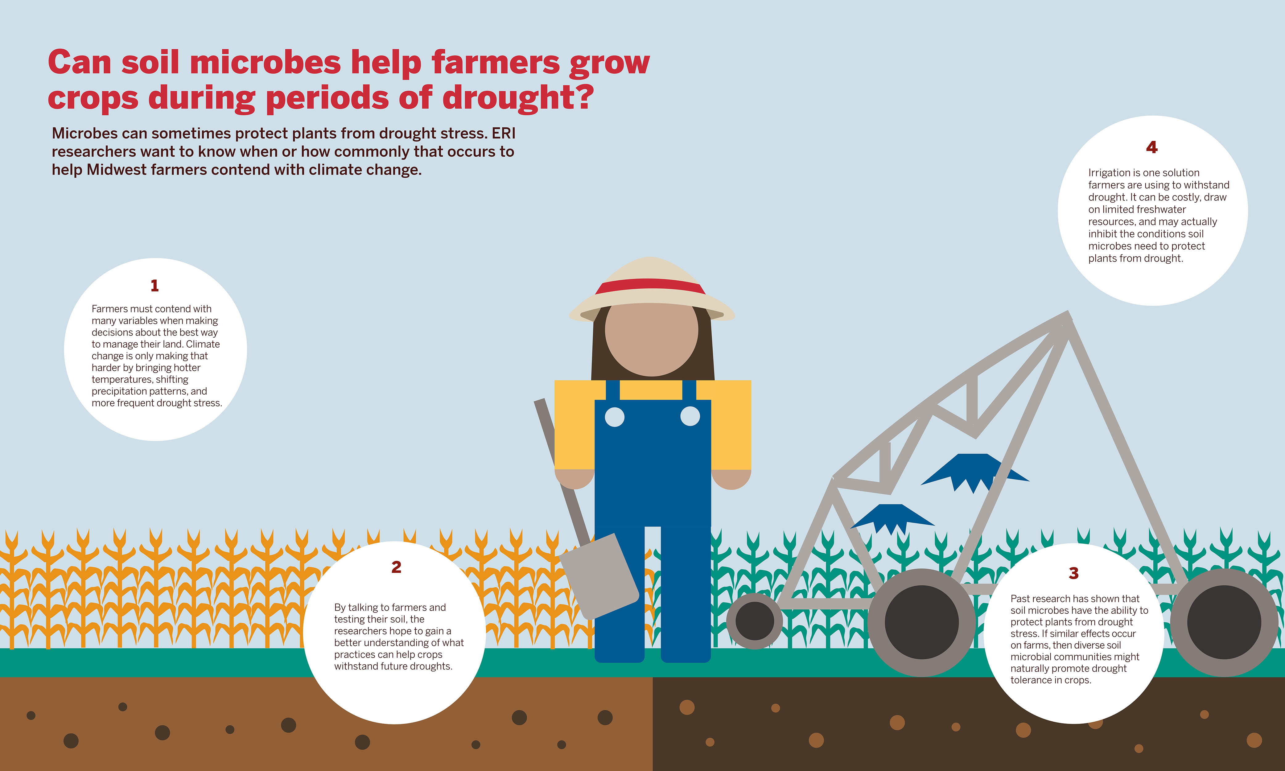 An infographic summarizing the NSF study: Can soil microbes help farmers grow crops during periods of drought?