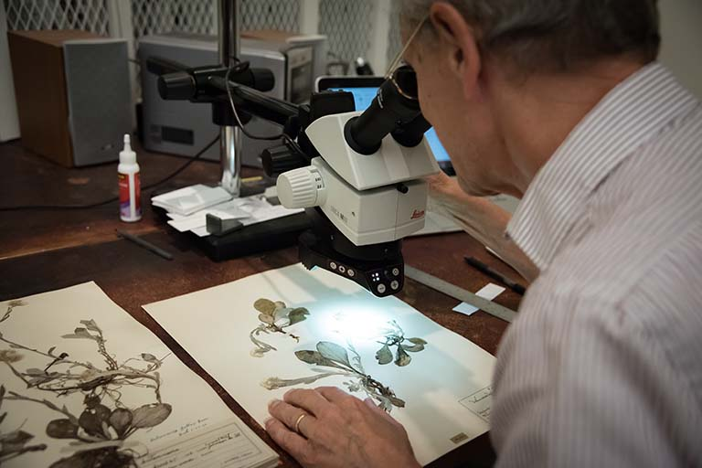 Paul Rothrock examines a dried and pressed plant specimen under magnification.