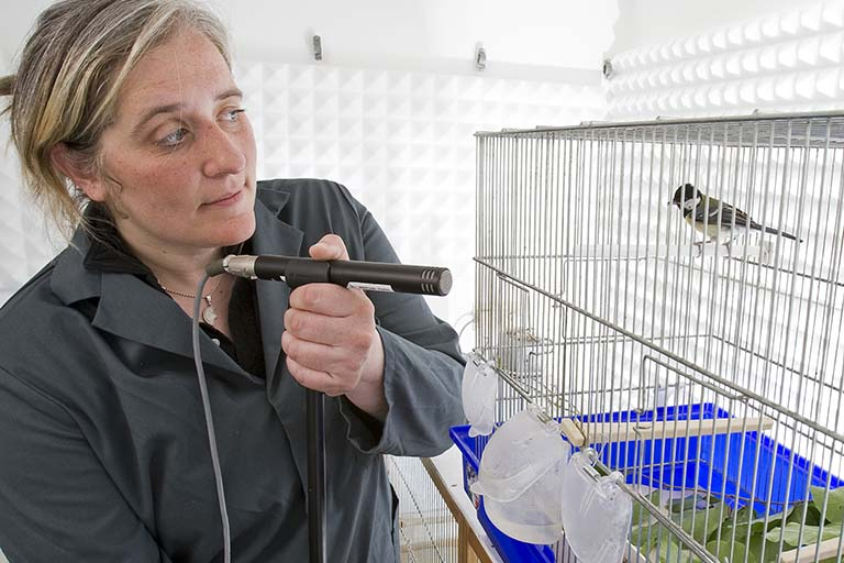 Sue Anne Zollinger holding a microphone, recording vocalizations of a caged male Great Tit (Parus major).