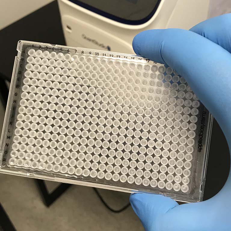 Craig Pikaard holds a 384-well plate in his gloved hand—demonstrating the small size of the clear plate with 384 depressions tightly arranged in 16 straight rows and 24 columns.