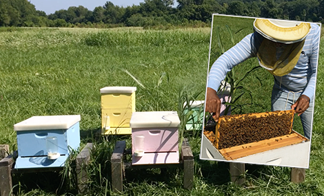"The Newton Lab apiary is located at the IU Research & Teaching Preserve. The hive boxes are painted different colors for identification purposes. For example, lab members can note that they sampled the ""yellow"" colony."