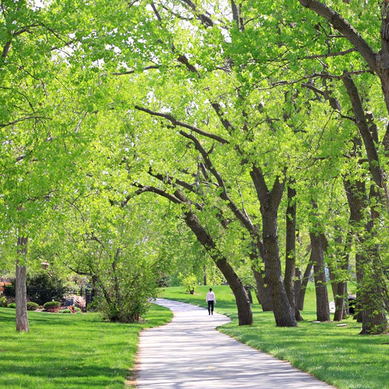 Person walking on urban trail lined with green grass and tall, leafy trees.
