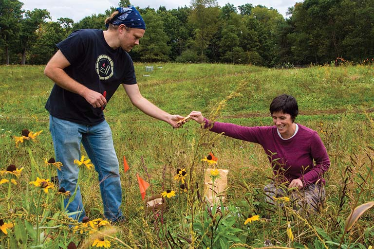 A man and a woman collect plant materials from the prairie plants in a native species versus invasive species field experiment.