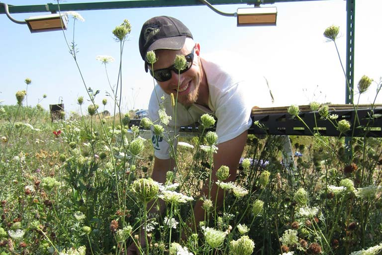 A member of Lau's lab checks on the prairie plants in the field warming experiment. Warming lamps hang overhead.