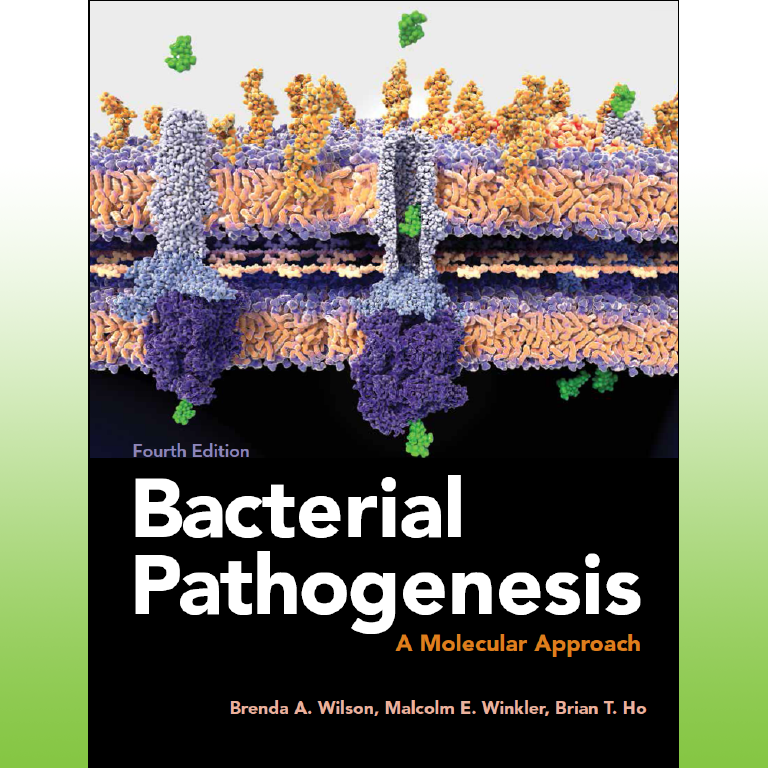 Book cover of fourth edition of Bacterial Pathogenesis—A Molecular Approach.